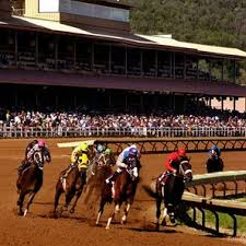 Horse Race pic